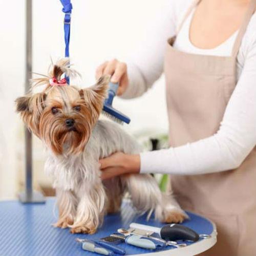 perro en peluqueria canina