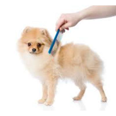 peinando al perro