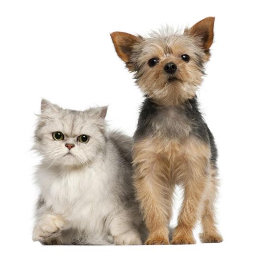 Cuidado del pelo de los perros y gatos
